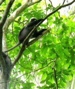 Im Dschungel in Thailand