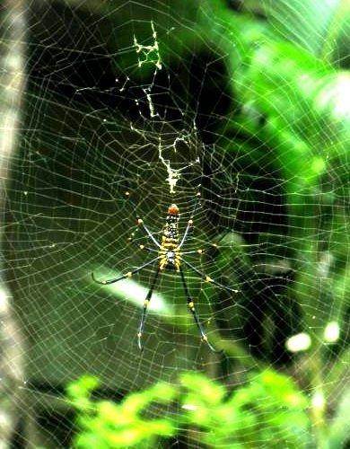 Grüne Spinne im Dschungel